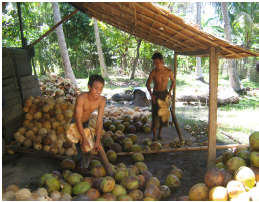 balantak-dehusking-coconuts