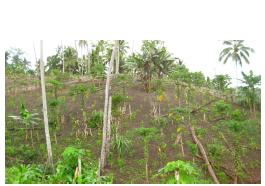 balantak-garden-near-dolom-village