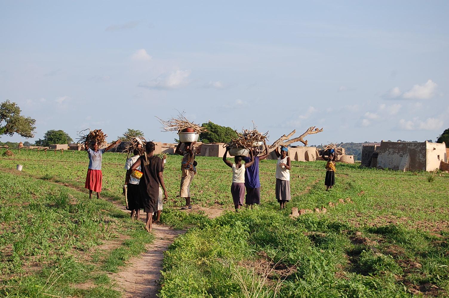 Femmes en train de porter du bois. Ladies carrying wood.