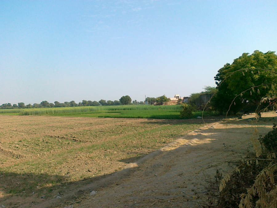 Irrigation is being used to sustain farms in rural Marwari speaking areas that are normally arid or semi arid.