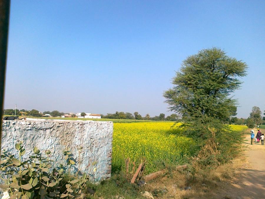 Marwari countryside, dry and irrigated.