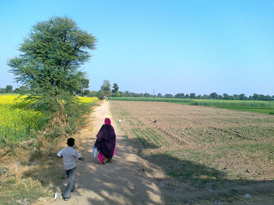 Marwari speakers walking on a dirt path to their village through fields.