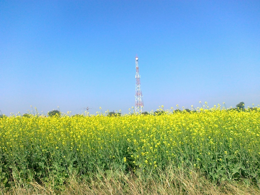 Agriculture and Cell phone towers are growing together.