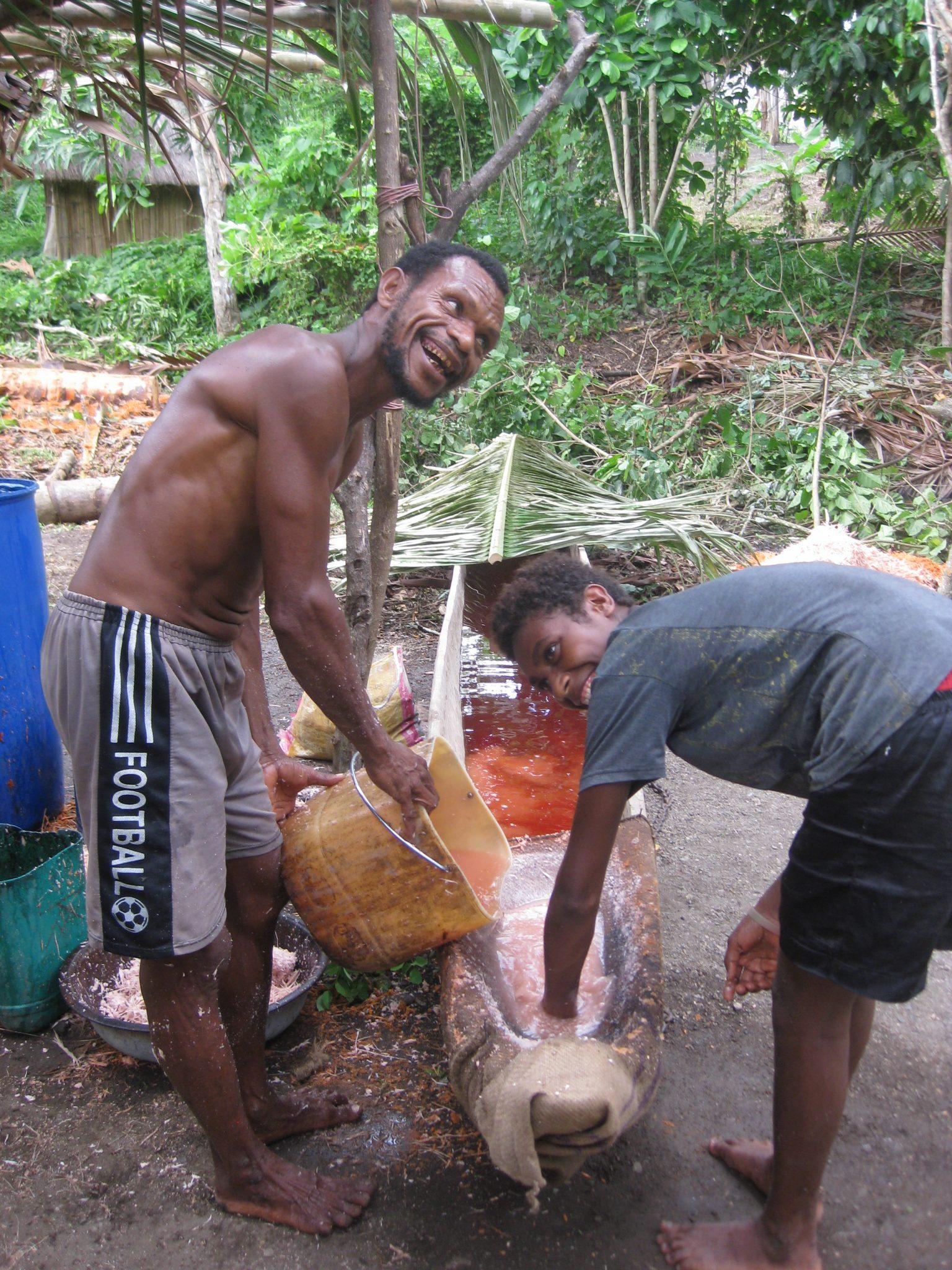 Sago Harvesting